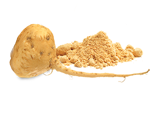My-Vega-Whole-Food-Ingredients-Maca-Root_313x225.png